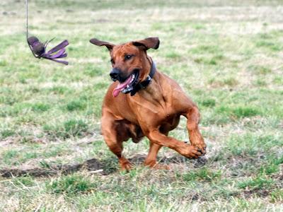 Reizangeltraining Beute jagen