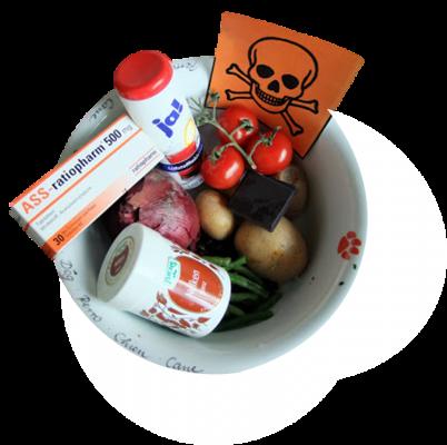 Giftige Lebensmittel für Hunde