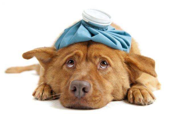 BARF Hunde krank