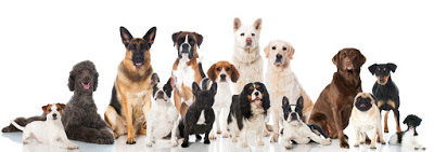 Auslastung Hunderassen