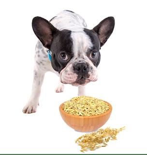 Getreide im Hundefutter