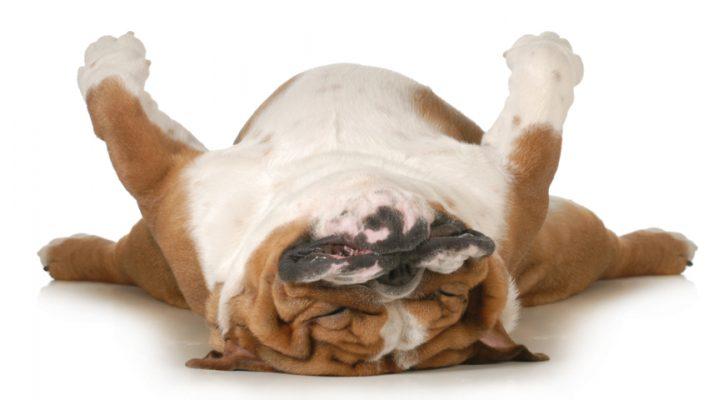 Langeweile Stress Hund