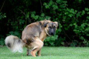 Hundekot bei BARF Durchfall Verstopfung