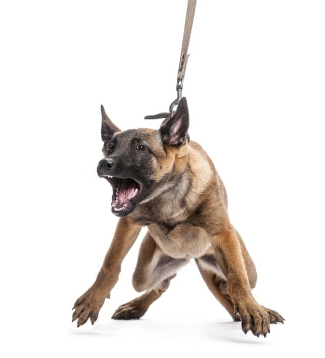 Hund Verhalten Futter